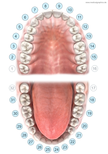 Universal numbering system - dental