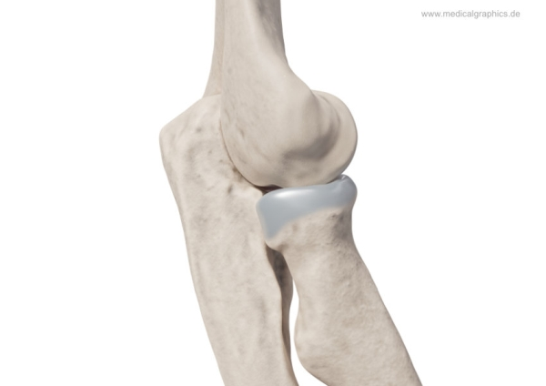 Elbow - lateral