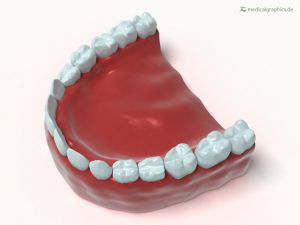 Full denture lower jaw