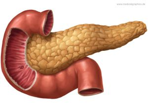 Pancreatic gland and duodenum