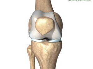 bones of the knee (front)
