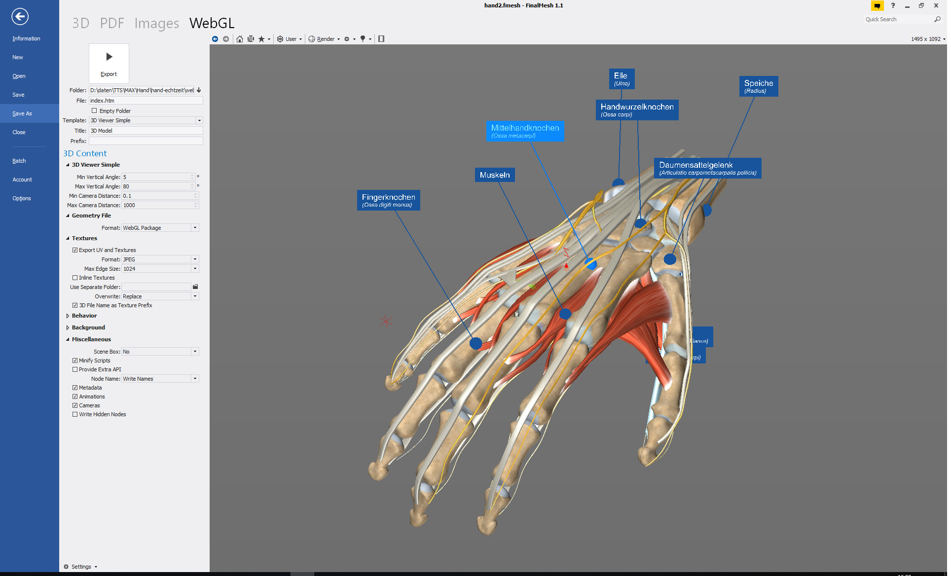 Anatomical 3d Models In Web Browser What Is A Diagram Finalmesh Hand Anatomie