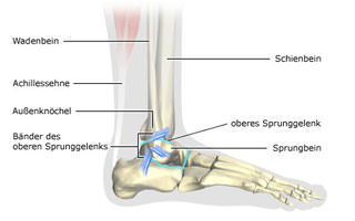 Ankle joint injury