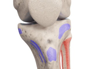 Muscle insertions knee - front